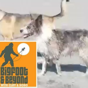 Bigfoot and Beyond with Cliff and Bobo - Ep. 016: Random Musings Minisode